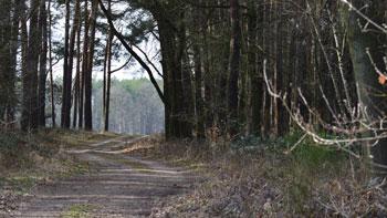 Dübener Heide